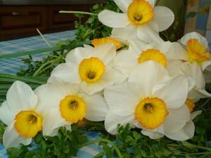 Нарциссы. Цветы существуют для того, чтобы напоминать нам, что жизнь — это праздник. Преддверие вечного праздника, для которого создан человек. И птицы, не заботясь ни о чем, живут самой веселой жизнью. Они поют среди ветвей и хвалят Господа.